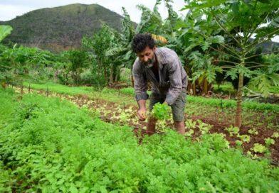 Proposta prevê aquisição de produtos da agricultura familiar durante a pandemia