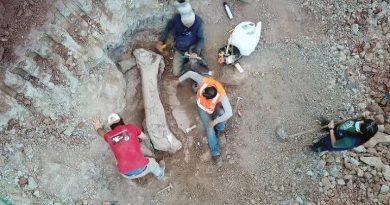 Fóssil de dinossauro gigante é encontrado em obra de ferrovia no Maranhão
